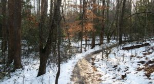 The Easy 1-Mile Winter Hike In South Carolina That's Positively Bewitching