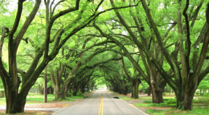 9 Epic Things You Never Thought Of Doing In South Carolina, But Should