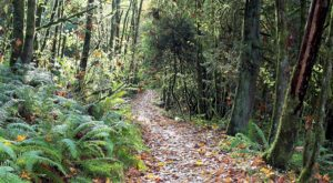 The Easy 1-Mile Winter Hike In Portland That's Positively Bewitching