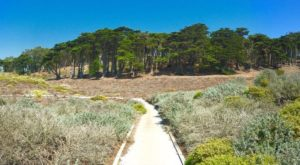 The Easy 1-Mile Winter Hike In San Francisco That's Positively Bewitching