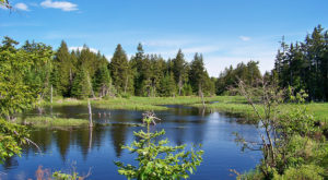 Visiting This One Wildlife Refuge In Maine Is Like Experiencing A Dream