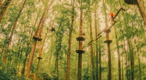 There's An Adventure Park Hiding In The Middle Of A Delaware Forest And You Need To Visit