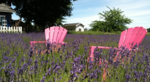 The Beautiful Lavender Farm Hiding In Plain Sight In Portland That You Need To Visit