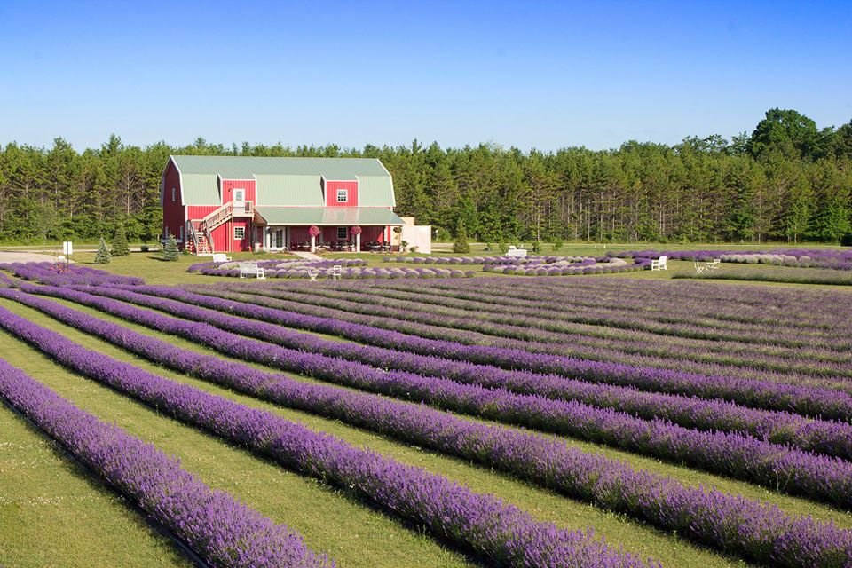 The Sweet Smell of Lavender Will Draw you to this Wisconsin Island