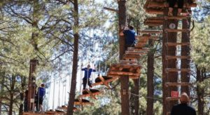 There's An Adventure Park Hiding In The Middle Of An Arizona Forest And You Need To Visit