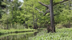 The Longest Bayou In The World Starts Right Here In Arkansas And It's Breathtaking