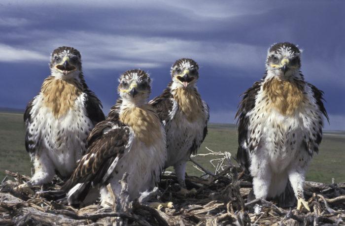 Morley Nelson Snake River Birds of Prey National Conservation Area - Idaho