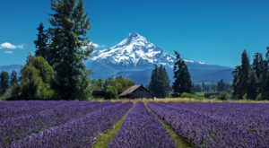 The Beautiful Lavender Farm Hiding In Plain Sight In Oregon That You Need To Visit