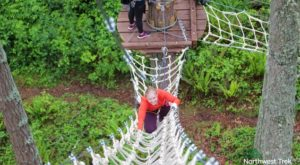 The Stomach-Dropping Canopy Walk Course You Can Only Find In Washington