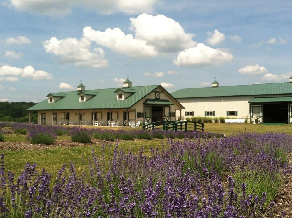 The Beautiful Lavender Farm Near Pittsburgh