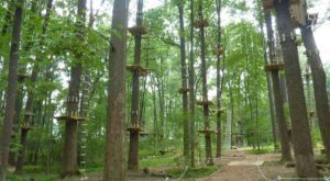 There's An Adventure Park Hiding In The Middle Of A West Virginia Forest And You Need To Visit