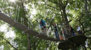 There's An Adventure Park Hiding In The Middle Of A South Carolina Forest And You Need To Visit