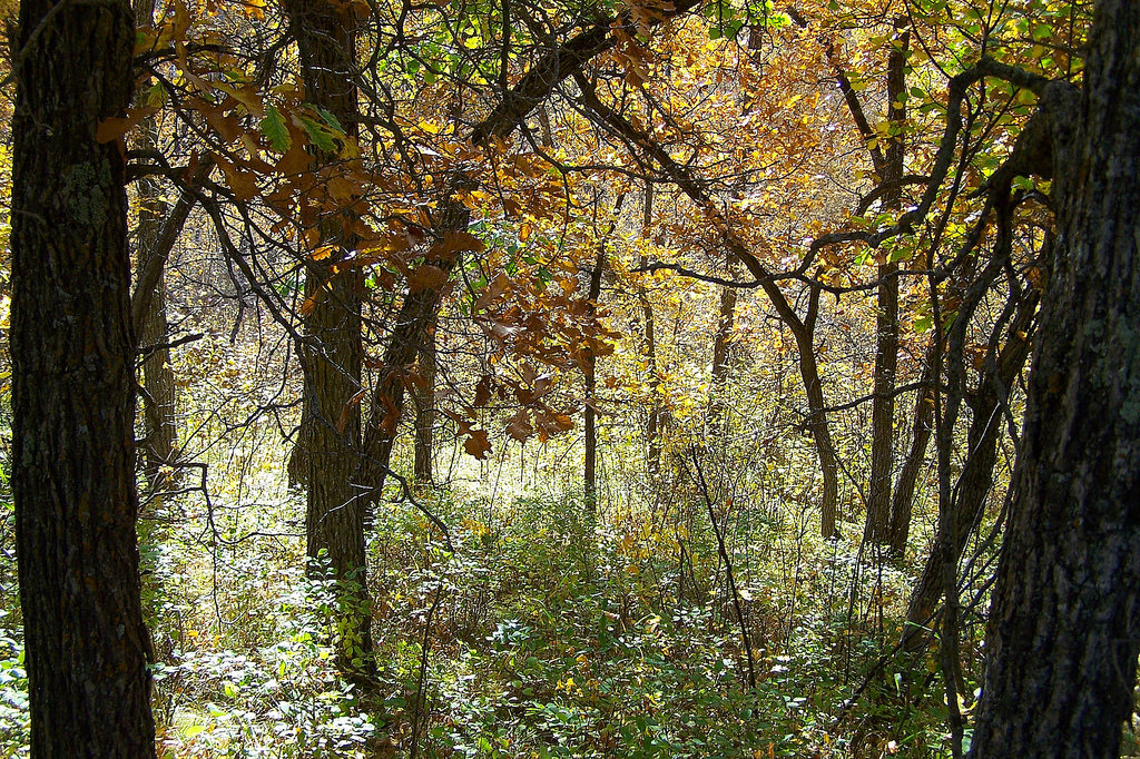 The Homen State Forest In North Dakota Is Unlike Anything Else