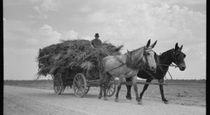 These 15 Rare Photos Show Arkansas's Farming History Like Never Before