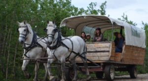 This Covered Wagon Tour In Alaska Will Transport You Back In Time