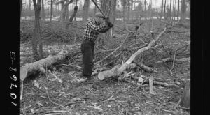 These 10 Rare Photos Show Wisconsin's Logging History Like Never Before