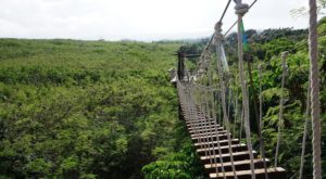 There's An Adventure Park Hiding In The Middle Of A Hawaii Jungle And You Need To Visit