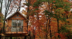 This Treehouse In New York Will Give You An Unforgettable Experience