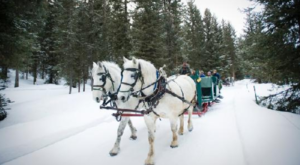 The Magical Sleigh Ride Dinner In Montana You Need To Experience