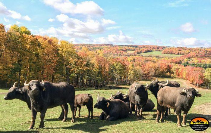 Hidden Valley Animal Adventure Near Buffalo Is Incredibly