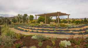 The Beautiful Lavender Farm Hiding In Plain Sight In Denver That You Need To Visit