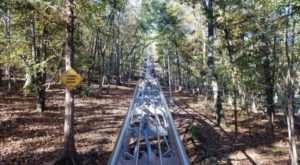 There's An Adventure Park Hiding In The Middle Of A Missouri Forest And You Need To Visit