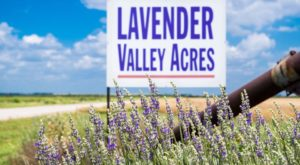 The Beautiful Lavender Farm Hiding In Plain Sight In Oklahoma That You Need To Visit
