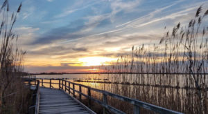 Virginia's Beautiful Boardwalk Hike Will Leave You In Awe
