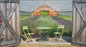 The Beautiful Lavender Farm Hiding In Plain Sight In Maine That You Need To Visit