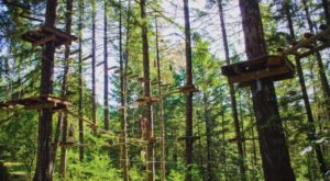 There's An Adventure Park Hiding In The Middle Of An Oregon Forest And You Need To Visit
