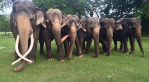You'll Never Forget A Visit To This One Of A Kind Elephant Ranch In Florida