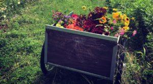 The Breathtaking Flower Farm Hiding In Missouri That Looks Like A Dream