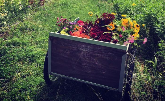 Take A Trip To This Breathtaking Flower Farm In Missouri
