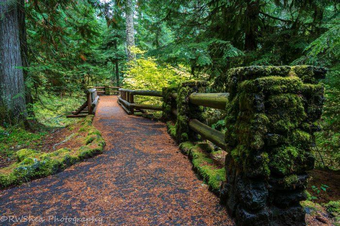 Hike Along The Award Winning Mckenzie River Trail In Oregon