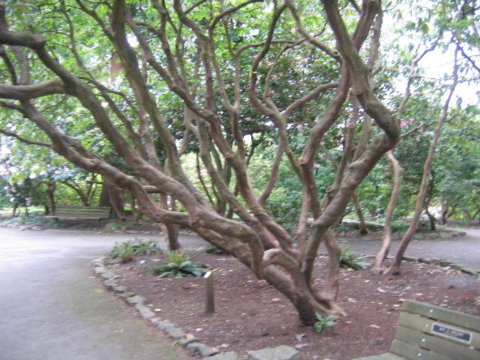 Crystal Springs Is The Best Secret Garden In Portland