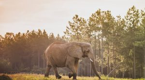 There's A One Of A Kind Elephant Sanctuary Right Here In Tennessee