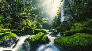 A Visit To This Stunning Hidden Waterfall In Oregon Will Change Your Life