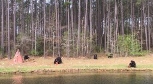 You'll Never Forget A Visit To This One Of A Kind Chimpanzee Sanctuary In Louisiana