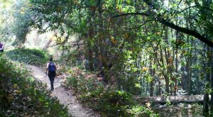 Take A Walk Through This Enchanted Forest In Southern California To Feel Like You're In A Fairytale