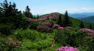 It's Impossible Not To Love This Breathtaking Wild Flower Trail In Tennessee
