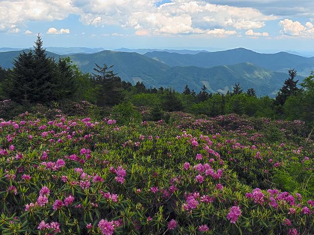 Craggy Gardens In North Carolina Is Magically Enchanting