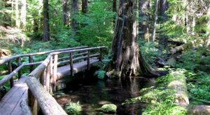 Hike Along This Award Winning Riverfront Trail For An Unforgettable Oregon Adventure