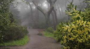 The Haunted Hike In San Francisco Will Send You Running For The Hills