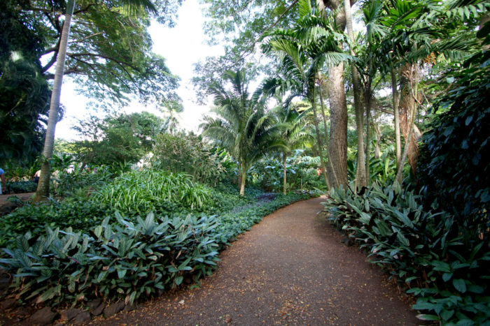 allerton garden reviews. established and curated by robert allerton, this 80-acre garden is tucked into the lawai valley on southern shores of kauai, transected allerton reviews