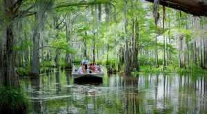 11 Swamp Boat Tours In Louisiana That Will Make You Fall In Love With The Bayou