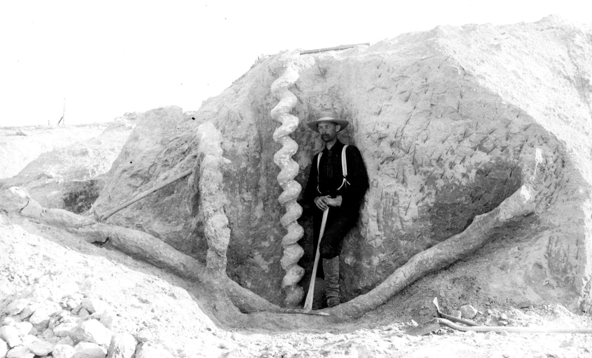 The Daemonelix In Nebraska Are One Of History S Oddest Wonders