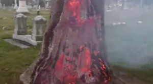 A Devil's Tree Was Just Discovered In This Missouri Cemetery And It's Beyond Creepy
