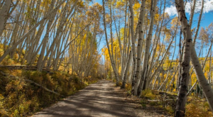 Colorado's Tunnel Of Trees Is Positively Magical And You Need To Visit