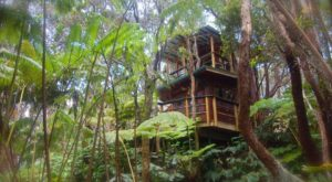 Spend The Night In This Canopy Treehouse In Hawaii For An Unforgettable Experience