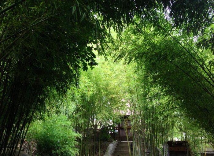 Itu0027s Got A Beautiful Bamboo Garden!